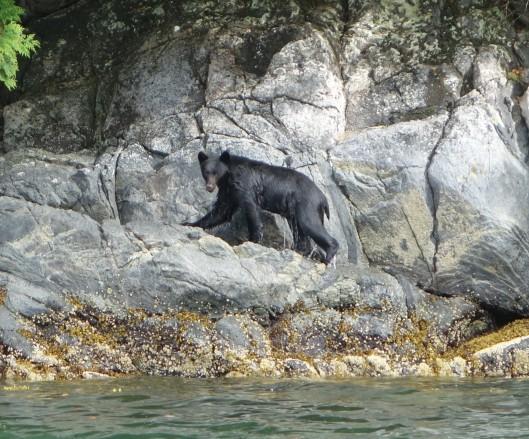 Bear on land